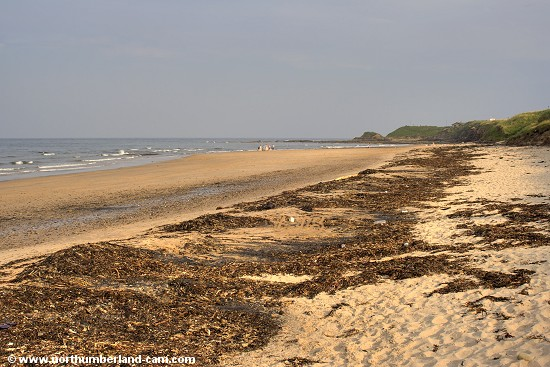 View from the north end of Cresswell Beach - a lot of seaweed after heavy seas.