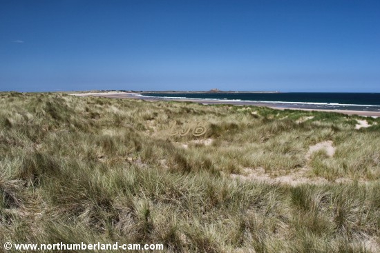 The view north to Holy Island from the path that leads through the dunes to the beach.